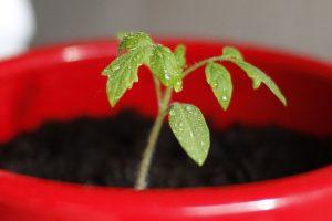 Plant Veg